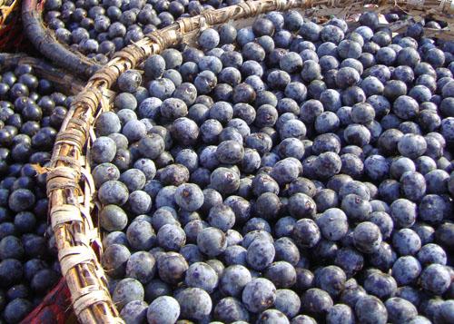 Fructele de acai si beneficiile lor
