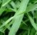 Naturya_Organic_Barleygrass_Powder1