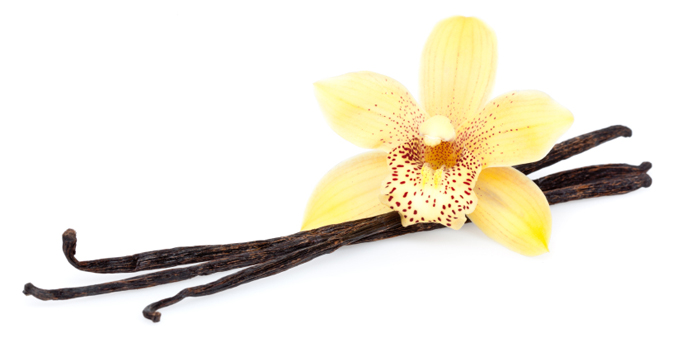 vanilla beans with blossom