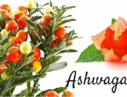 Ashwagandha-for-Diabetes-870x400