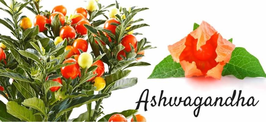 Ashwagandha – Miracolul antistres