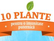 infographic SW plante
