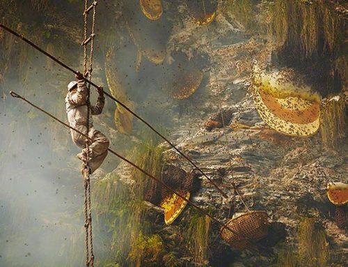 Vânătorii de miere de pe stâncile munților Himalaya