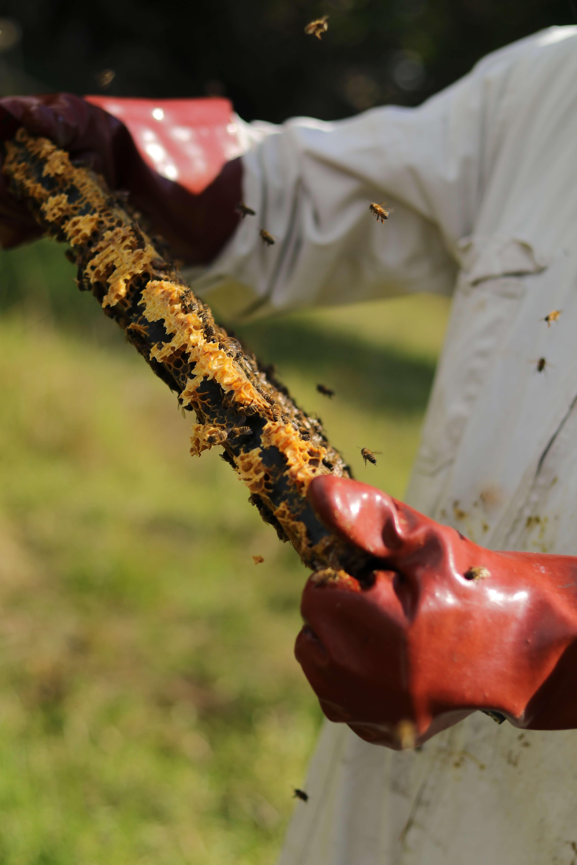 compozitie venin de albine