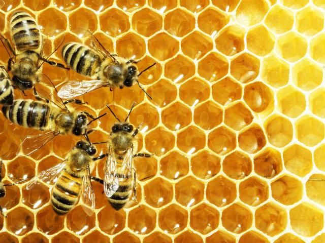 Veninul de albine – stiinta si beneficii