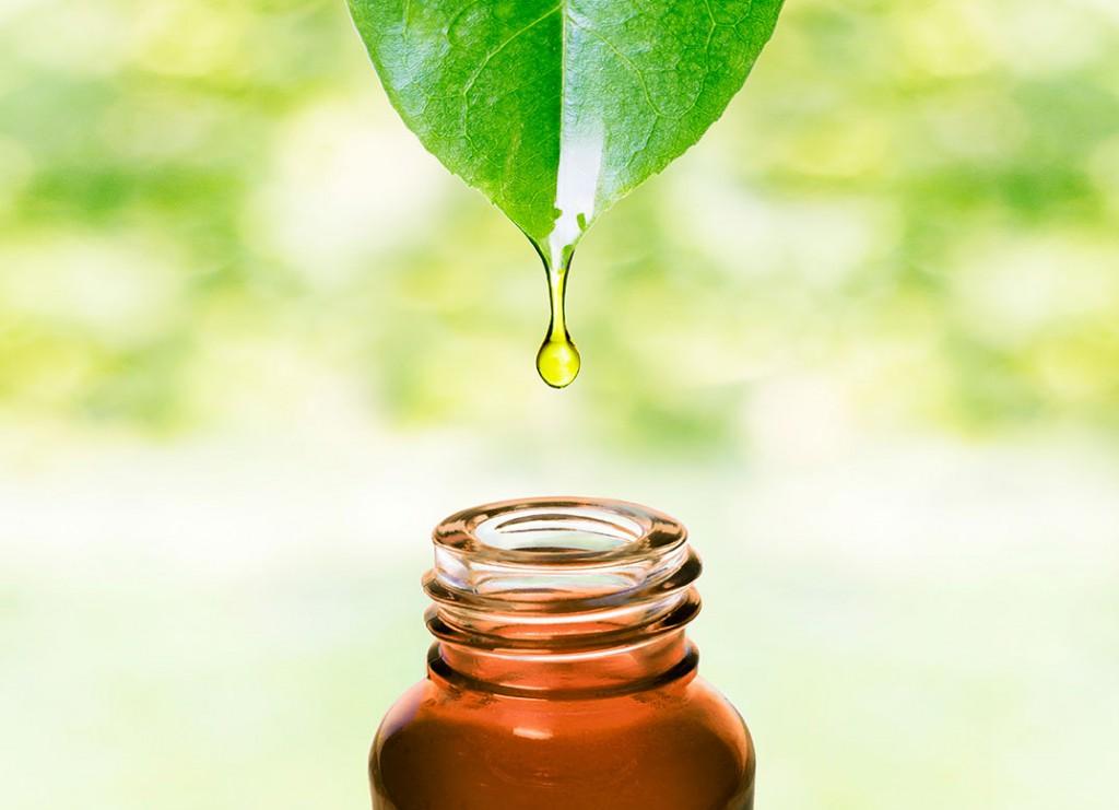 Cum şi pentru ce poţi folosi ulei de tea tree