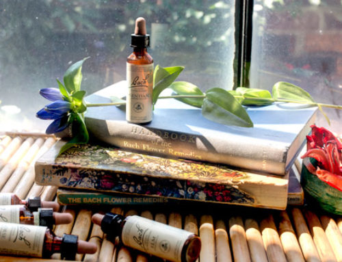 Terapia Bach: echilibrarea sanatatii prin terapie florala