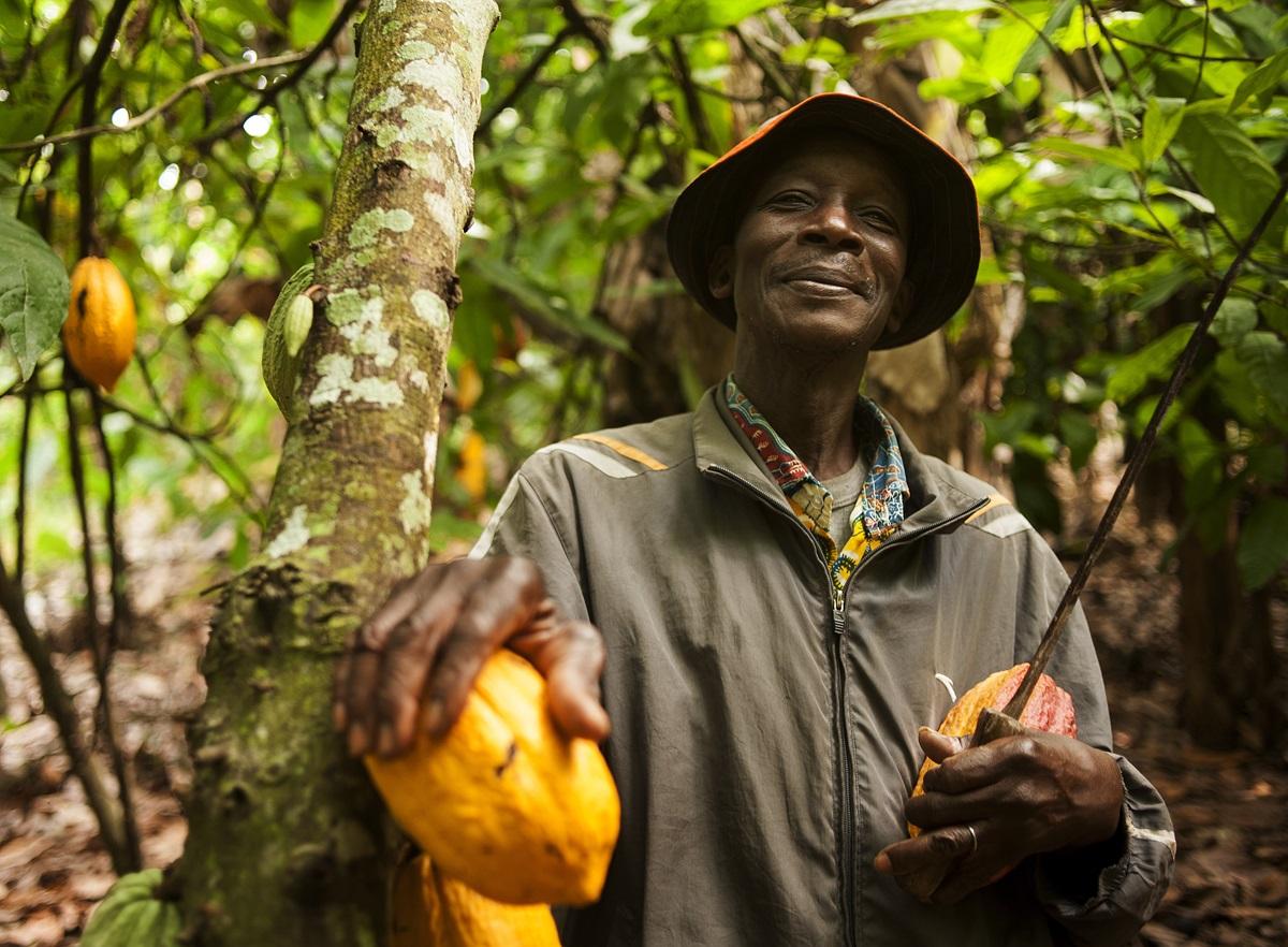 fermier plantatie cacao