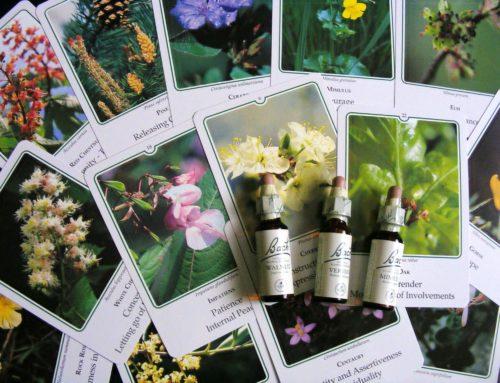 Cum te pot ajuta anumite remedii florale Bach in perioada de sarcina?