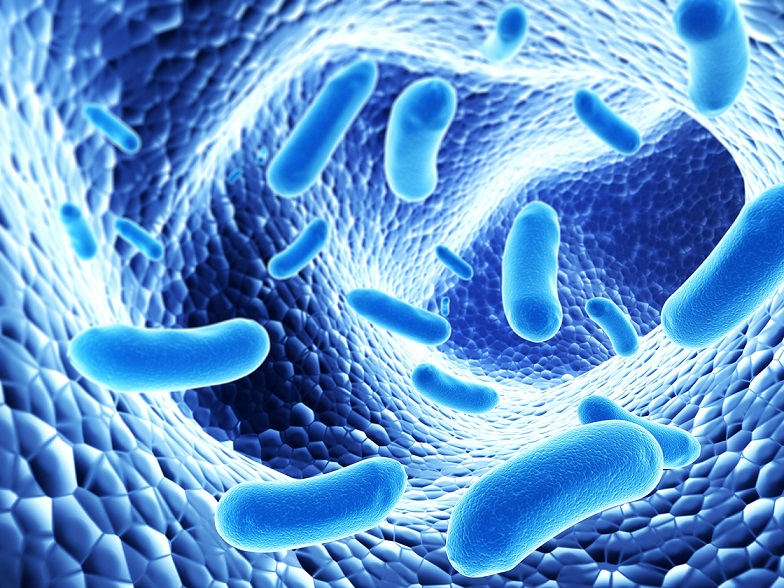 bacterii bune
