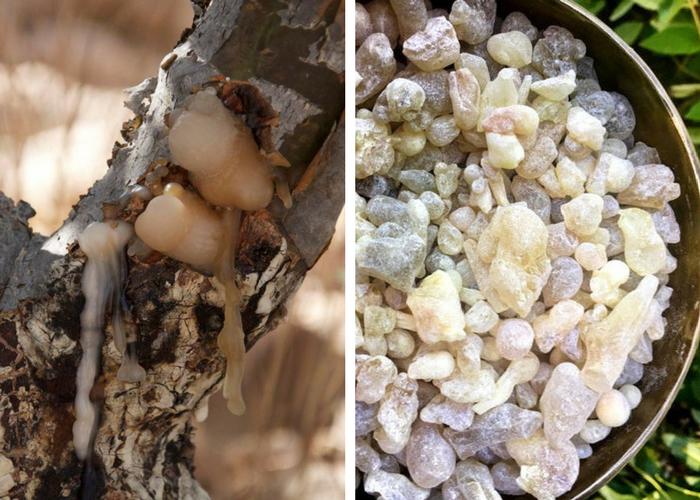 Rășina cu rol antiinflamator: extractul de tămâie