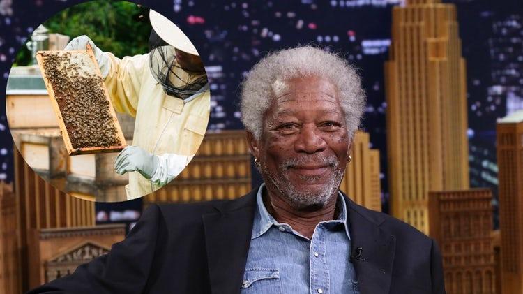 Actorul Morgan Freeman si-a transformat ferma intr-un sanctuar pentru albine