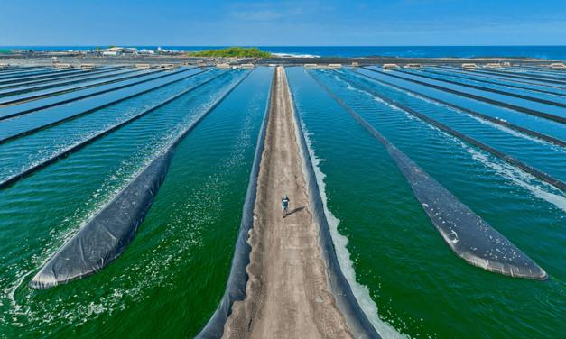 Spirulina – 6 beneficii ale algei care ar putea combate malnutriția