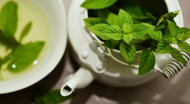 Plante pentru sistemul digestiv: menta