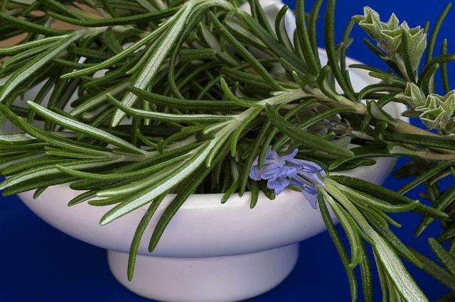 Plante pentru sistemul digestiv - rozmarin