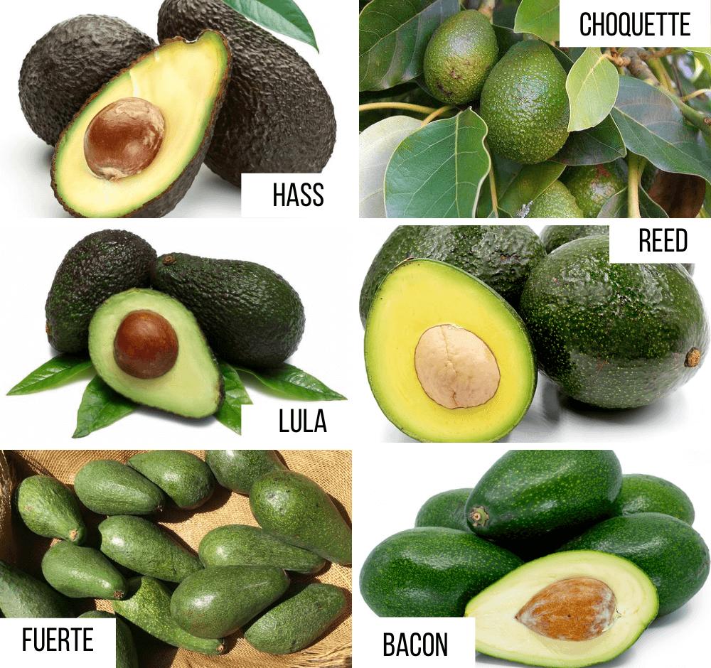 Tipuri de avocado