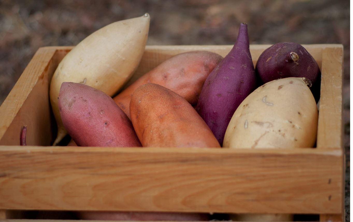soiuri cartofi dulci